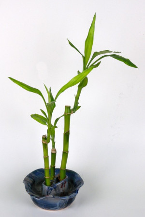 Lucky Bamboo Holder - Product Image